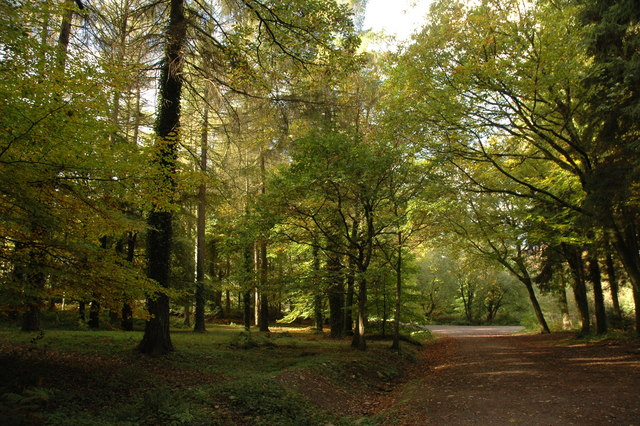 forest of dean walks pdf